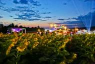 Ockan 2017 - Das Sonnenblumenevent